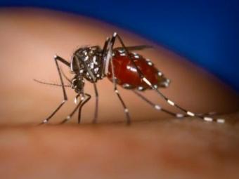 Google будет отслеживать вспышки лихорадки денге