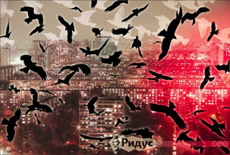 Зачем жителей Подмосковья пугают птичьим гриппом