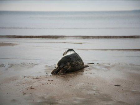 На островах Финского залива создадут заповедник