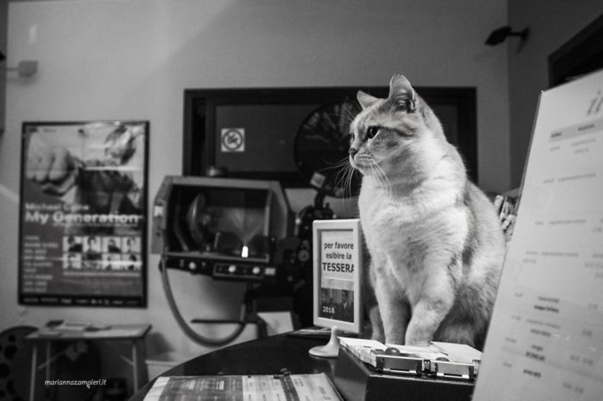 увидите картинки кошек как они работают предупредить новичков