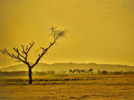 Ученые назвали единственный эффективный метод борьбы с глобальным потеплением