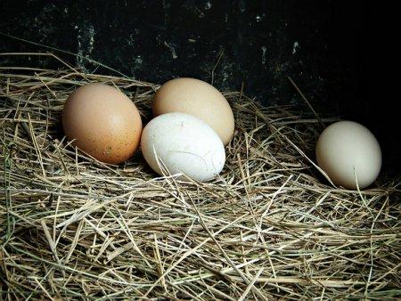Эксперты Роскачества рассказали, как правильно выбрать при покупке куриные яйца, и развеяли мифы