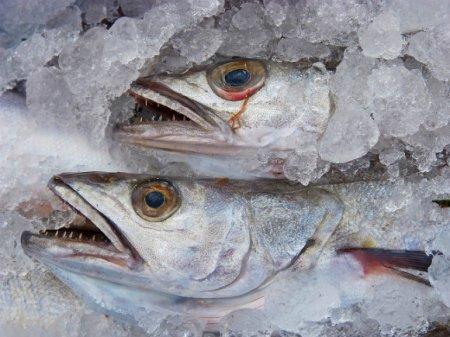 На Камчатке сваленные у правительства рыбные головы приняли за акцию протеста (видео)