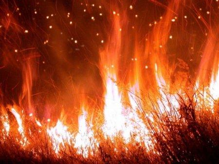 Власти Хакасии объявили ситуацию с природными пожарами в регионе критической
