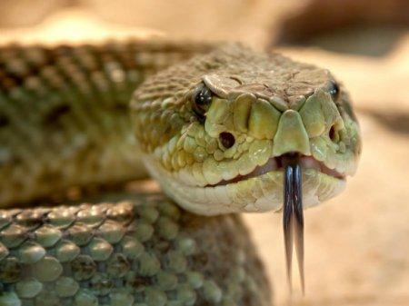 В многолюдном месте в Бангкоке мужчина вытряхнул из мешка змей и начал отрезать им головы