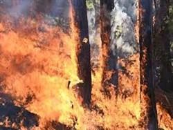 Более 18 тысяч гектаров леса горят в Забайкальском крае