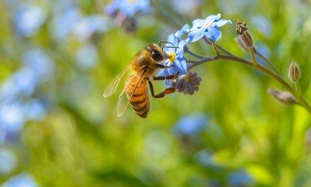 Самцы и самки диких пчел предпочитают разные виды цветов
