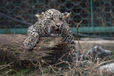 WWF назвал виды животных, находящихся под угрозой исчезновения в России