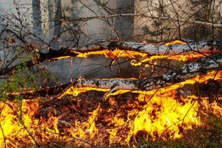 На территории РФ зарегистрировали около 30 крупных лесных пожаров
