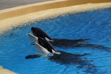 """Учёный рассказал, когда выпустят вторую группу животных из """"китовой тюрьмы"""""""