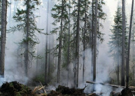 На Дальнем Востоке за сутки сгорело почти 58 тысяч гектаров леса