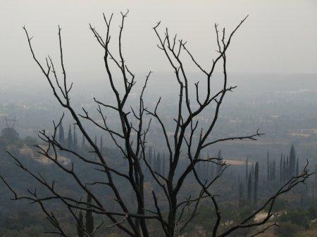 В Греции объявлен высший уровень пожарной опасности