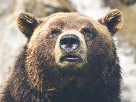 В Хабаровском крае медведь задрал грибника
