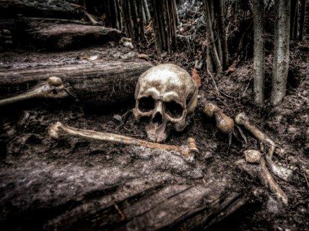 Скелет пропавшего охотника нашли в лесу под Пензой