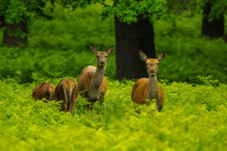 В США смягчили требования по защите исчезающих видов животных и растений