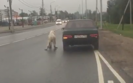 Певица Ольга Орлова спасла собаку, которую живодёр привязал к машине