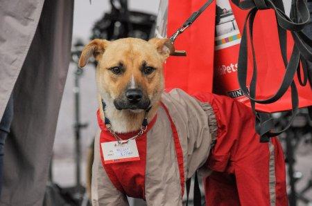 Фестиваль по пристройству бездомных животных «Друг для друга» прошел в Москве