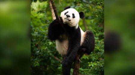 Зоопарк США сообщил о скорой передаче панды Бэй Бэй Китаю