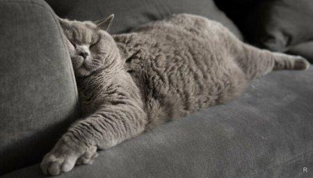 Если кошка спит на кровати хозяина: что гласит примета