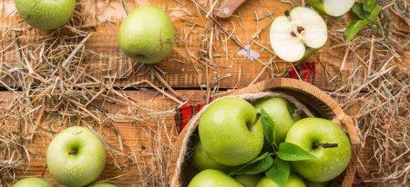 Яблоки растут в основном ночью — ученые