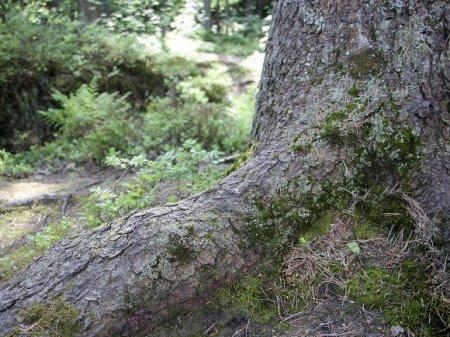 В Подмосковье отыскали двух женщин, потерявшихся на прогулке в лесу
