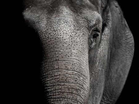 На Шри-Ланке катавший туристов слон умер от усталости