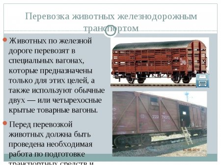 """""""Грязный хлев"""": блогер оценил украинский поезд """"Интерсити"""""""