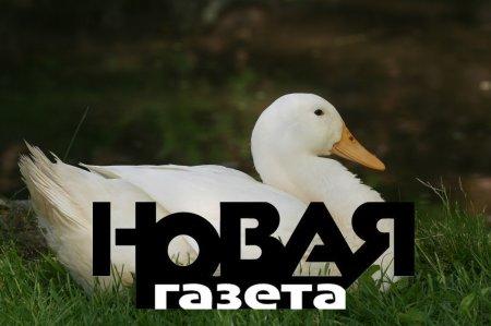 Мангушев раскрыл подноготную лжерасследования «Новой газеты» - Коротков нервничает