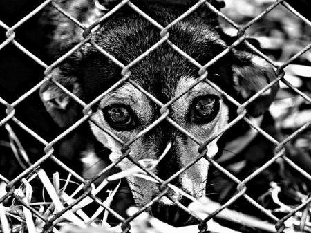 В якутском пункте передержки животных от мороза и голода массово гибнут собаки и кошки