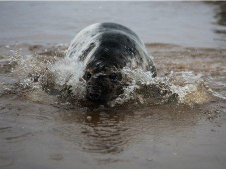 Зоозащитники выпустили в Финский залив трех тюленей (видео)