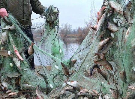 Эксперт спрогнозировал рост розничных цен на рыбу на 15% из-за коронавируса