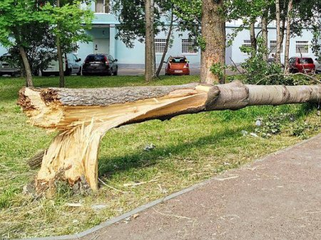 В Петербурге появились пострадавшие из-за шторма