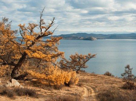Путин разрешил вырубать леса на берегах Байкала