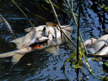 Реку в Ленобласти покрыла пена, тина и мертвая рыба (видео)