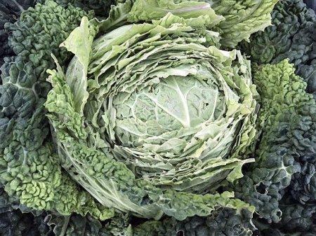 Эксперт рассказала, какие продукты замедляют рост раковых клеток
