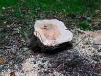 Магазины для обустройства дома в Европе продают древесину, незаконно поступившую из РФ