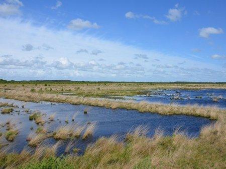 «Не нашли»: полиция опровергла сообщения о том, что пропавший на болотах омский министр Мураховский найден