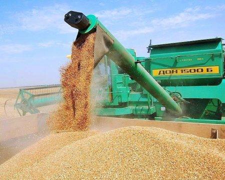 Россия ощутимо сократила экспорт пшеницы