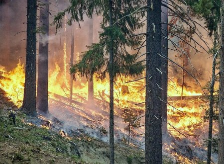 Лесные пожары в России охватили более миллиона гектаров