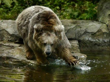 Московские туристы рассказали, как медведь съел их товарища в сибирском заповеднике