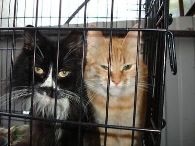 где в москве есть приюты для кошек после того
