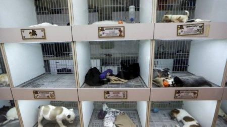 В Ванкувере запретили продажу кошек и собак в зоомагазинах