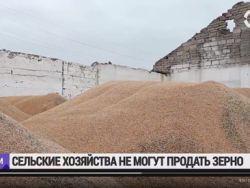 У новосибирских фермеров гниет непроданное зерно