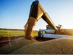 Битва за урожай: Россия обогнала Америку, но подавилась куском своего хлеба