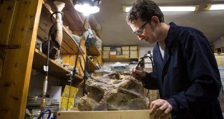 В Сибири найден неизвестный науке вид динозавра-титана