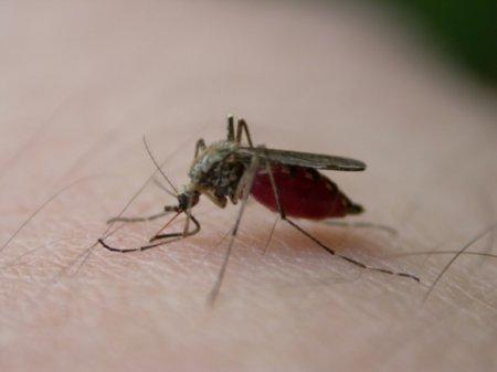В Воронежской области от небывалого нашествия комаров гибнет домашняя птица